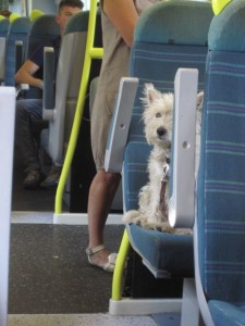 I wonder if the dog had a ticket?