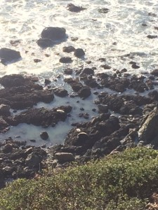 Seals! (the white blobs on the rocks)