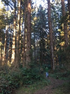 Sitka forest