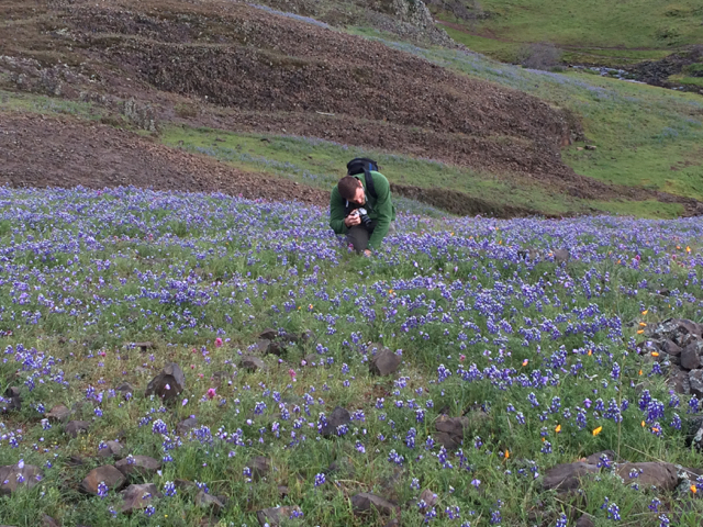 For scale, David in a field of blue lupine and purple owl's clover.